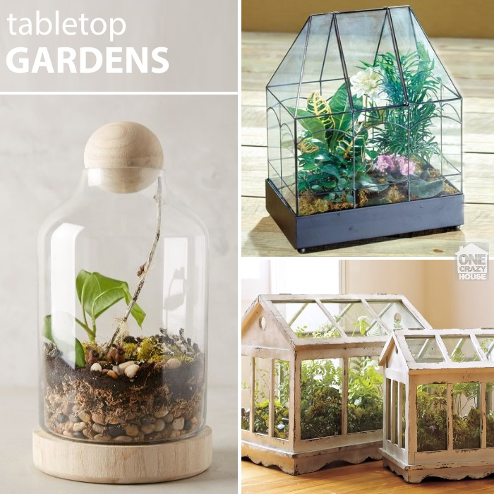 22 Ways To Make A Terrarium