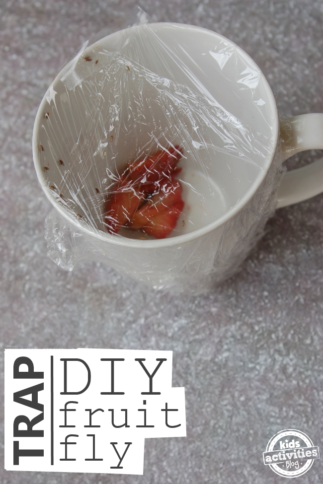 diy fruit fly trap 5 - Copy