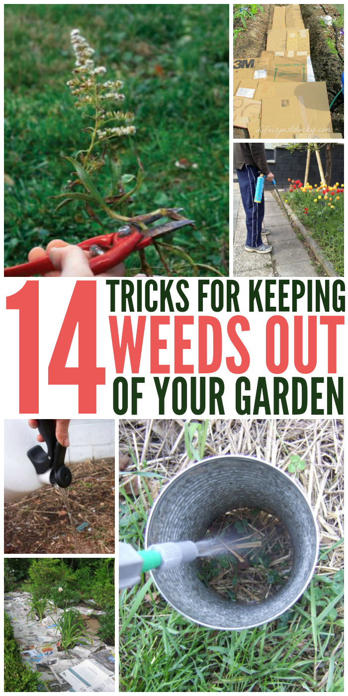 14 Tips to Get rid of weeds - from your garden, once and for all!