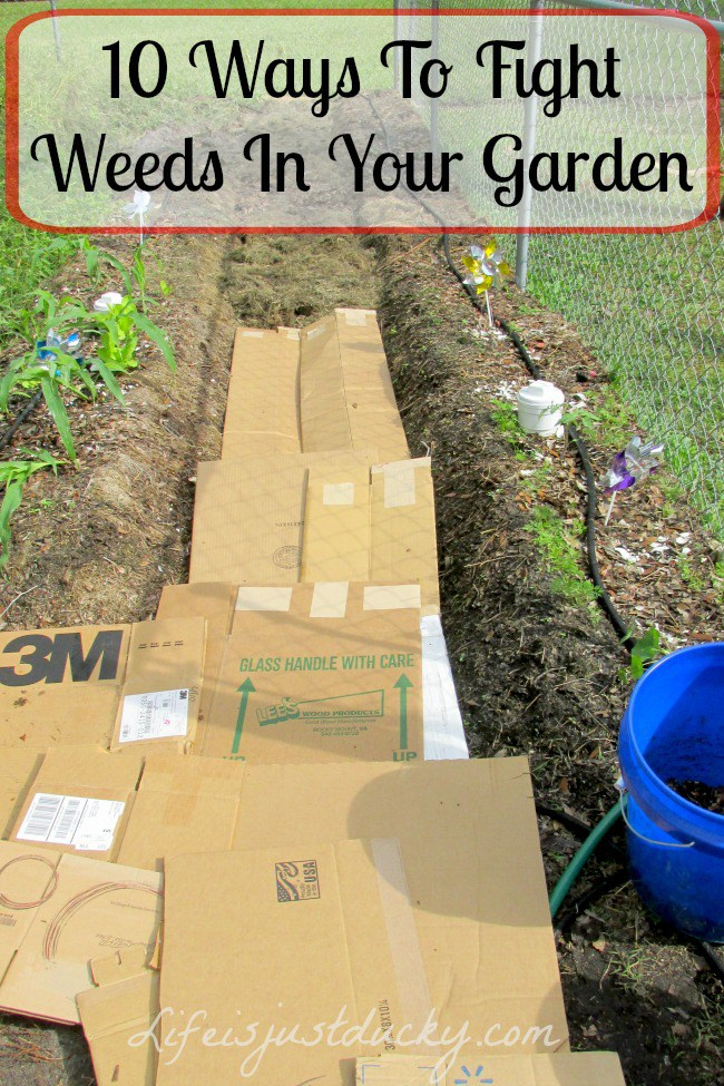 14 tips get rid of weeds from the garden once and for all - Weed killer safe for vegetable garden ...