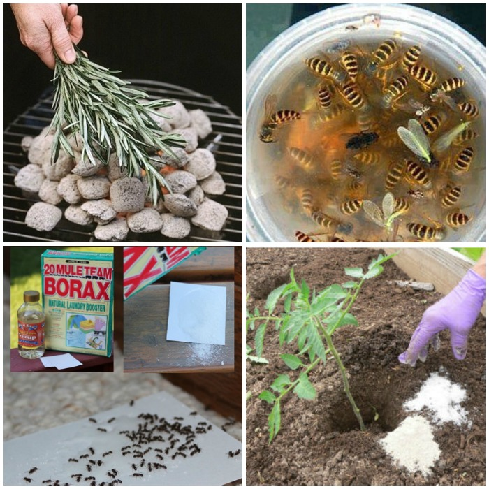 Clever Ways to Keep Pesky Bugs Away