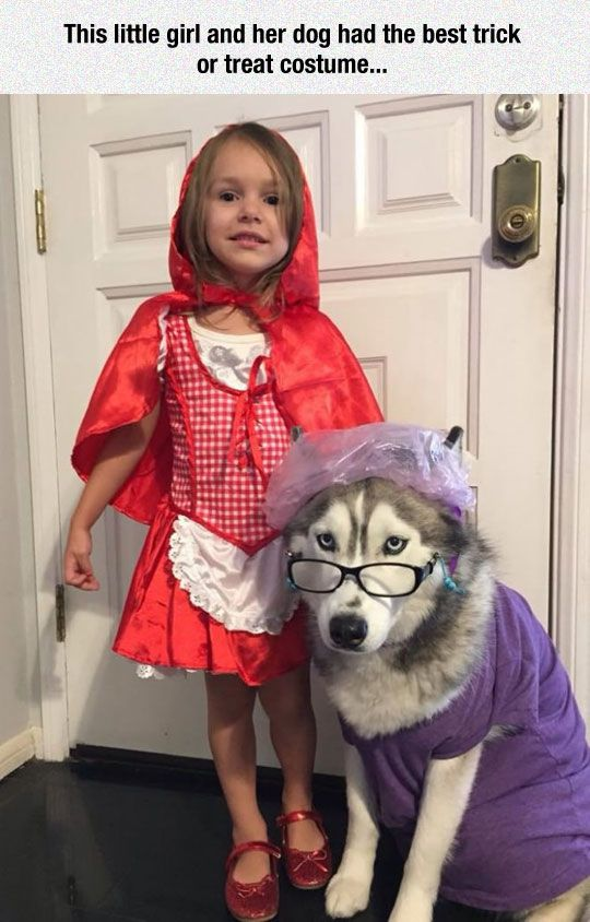 17 Hilarious Pet Costume Ideas for a Silly Halloween