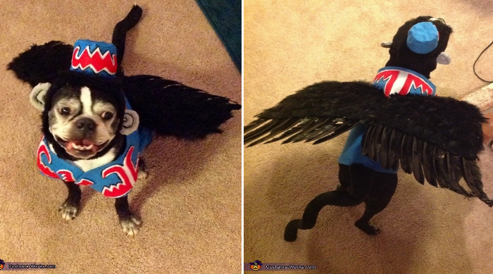 17 hilarious pet costume ideas for a silly halloween diy pet costume for halloween solutioingenieria Choice Image