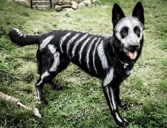17 hilarious pet costume ideas for a silly halloween dog skeleton paint pet skeleton diy solutioingenieria Image collections