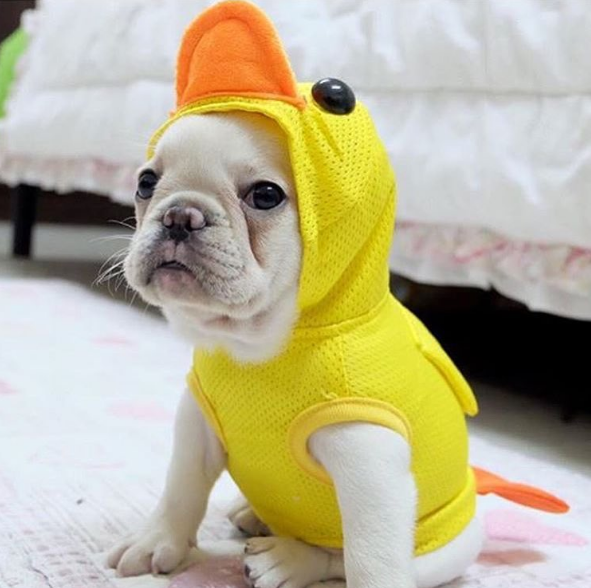 17 hilarious pet costume ideas for a silly halloween hilarious pet costume solutioingenieria Image collections