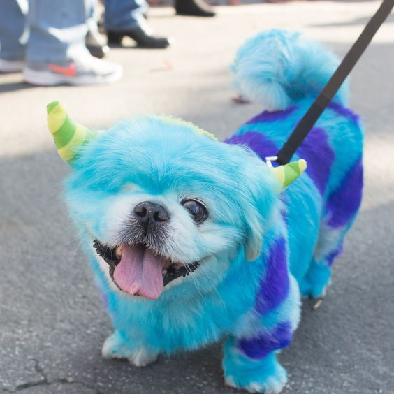 17 hilarious pet costume ideas for a silly halloween monster pet costume all you need is liquid chalk now isnt this the cutest pet costume you have seen these monster pet costume are pet safe and cover solutioingenieria Image collections