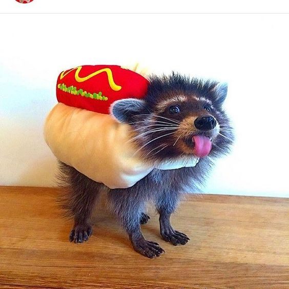 27 DIY Costume Ideas For Your Pet. Just because you have opposable thumbs and they don't doesn't mean you should get to have all the Halloween fun.
