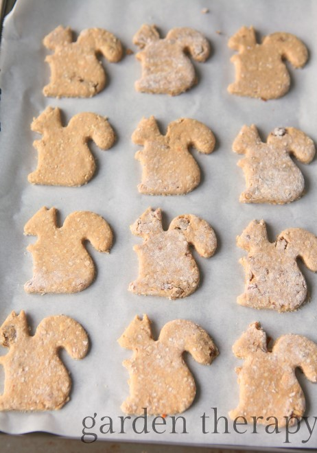 squirrely dog treats