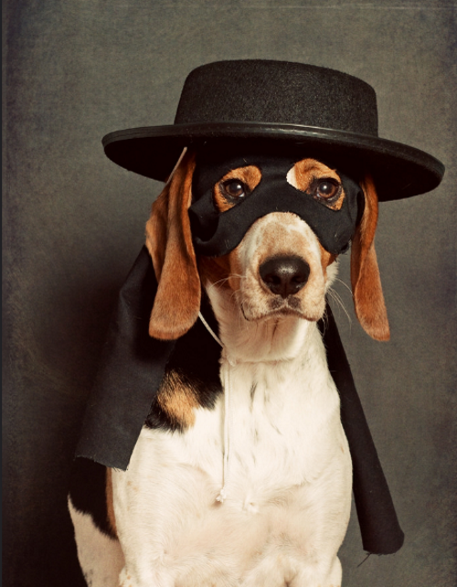 17 hilarious pet costume ideas for a silly halloween masked pet costume is this zorro or a magician this pet costume is easy to put together all you need is a small childs mask a small hat and some black solutioingenieria Image collections