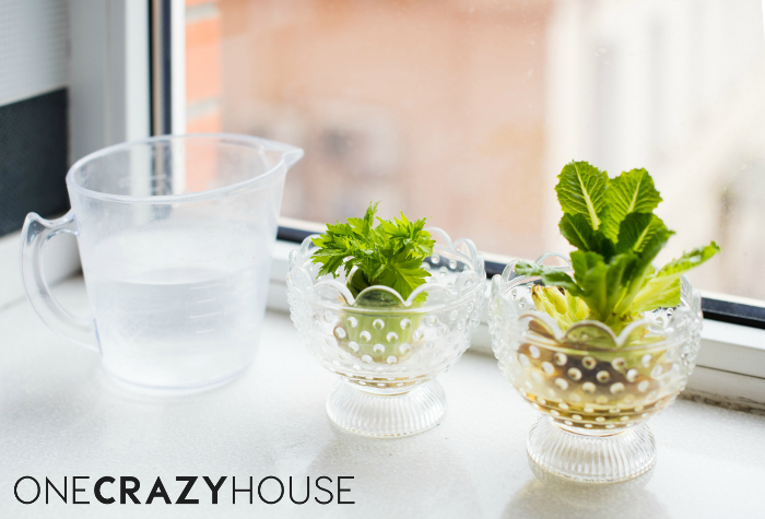 Easy Ways to Save Money - Regrow your veggies!