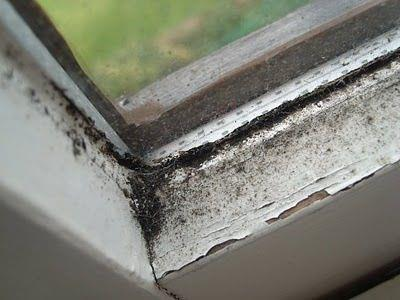 moldy-window-sills