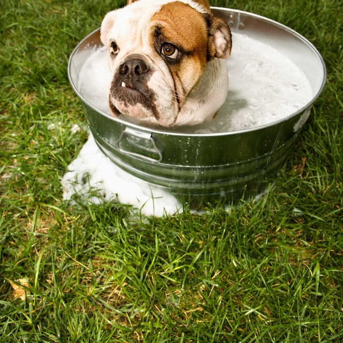 Crazy Simple Tips For Getting Rid Of The Dog Smell In Your