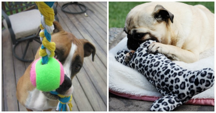 15 Pawesome DIY Dog Toys for Your Pup