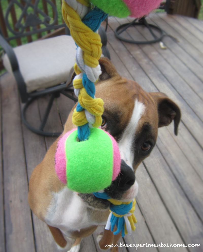 dog-toy-from-tshirt-yarn