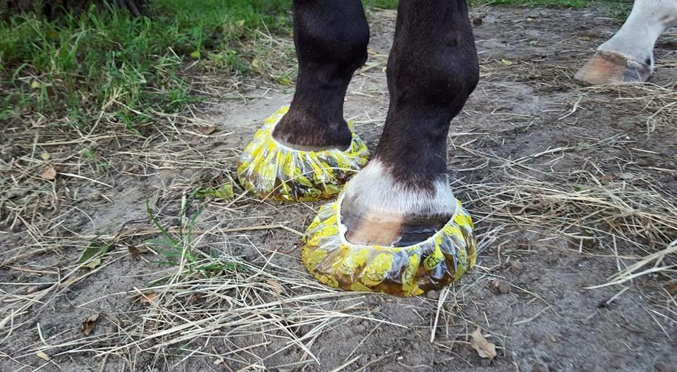 soak-horse-hooves