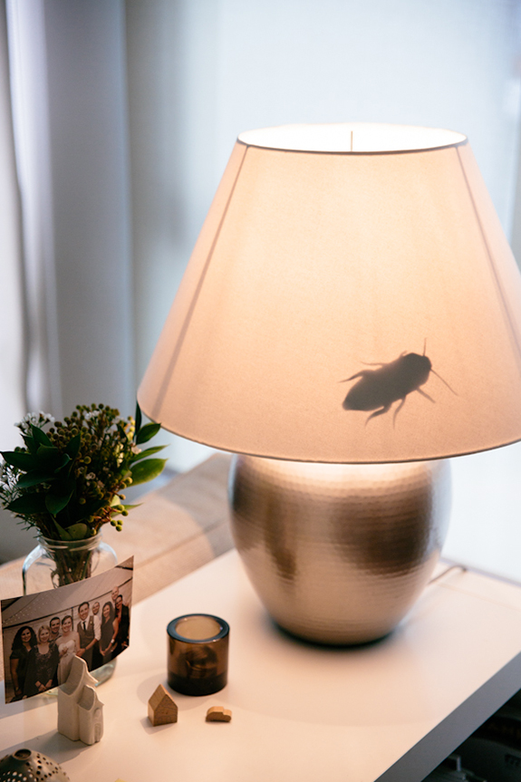 bugs-in-the-lamp
