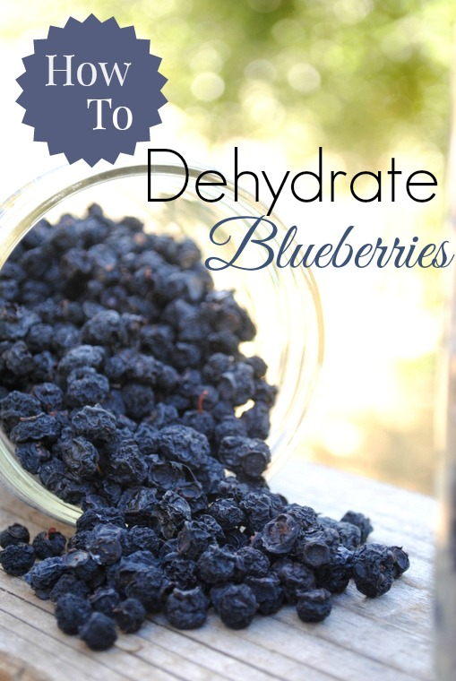 Food Dehydrator Recipes Blueberries