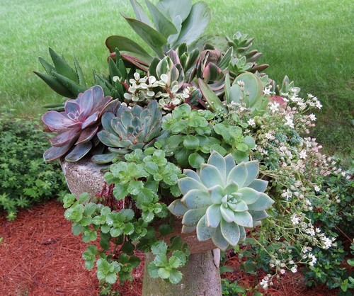 succulent-bird-bath