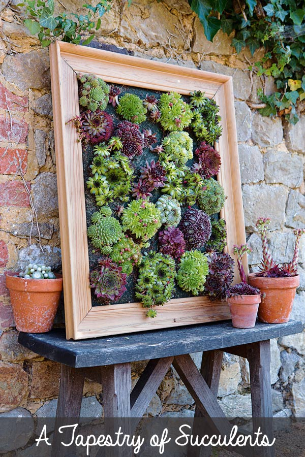 succulent-wall-planter