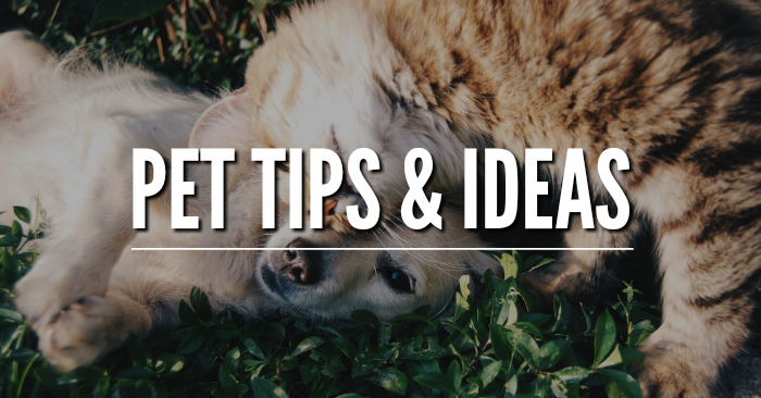 Pet Tips and Ideas