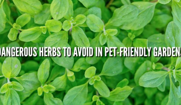 Dangerous Herbs for Pets