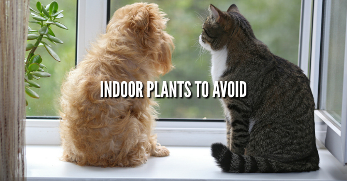Dangerous Plants to Avoid Indoors with Pets