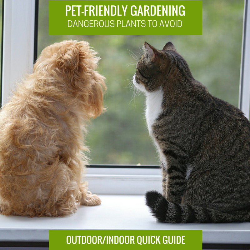 Pet-Friendly Gardening Dangerous Plant to Avoid