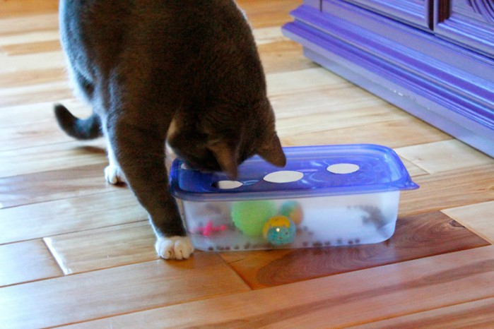 cat playing with DIY Tupperware cat puzzle