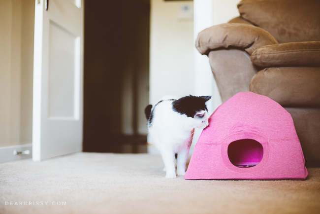 Make A Cat House With A T Shirt