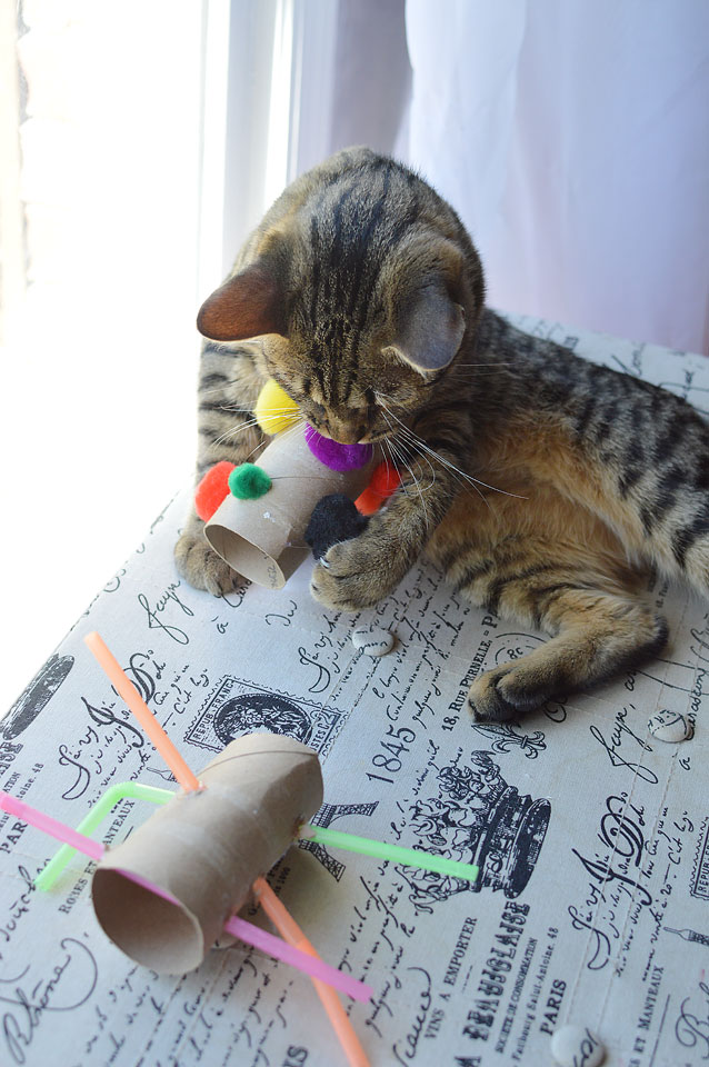 15 easy diy cat toys you can make for your kitty today