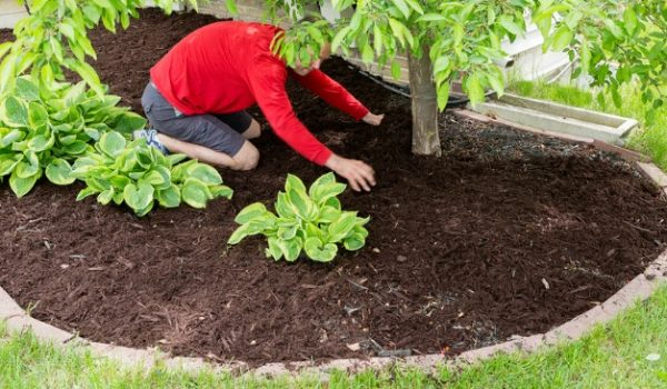 Mulch for weed prevention