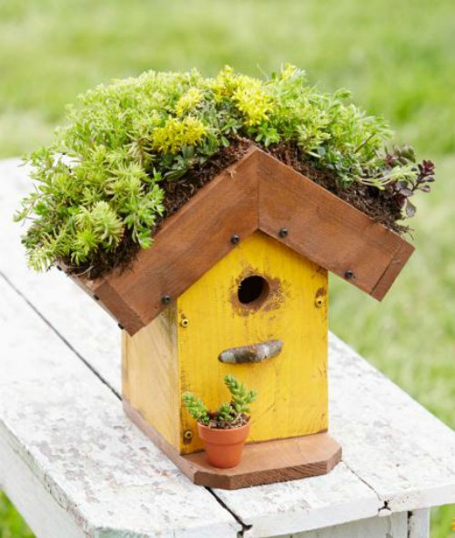 living roof birdhouse