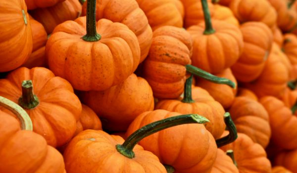 Irresistible Pumpkin Flavored Foods that You Can't Pass Up