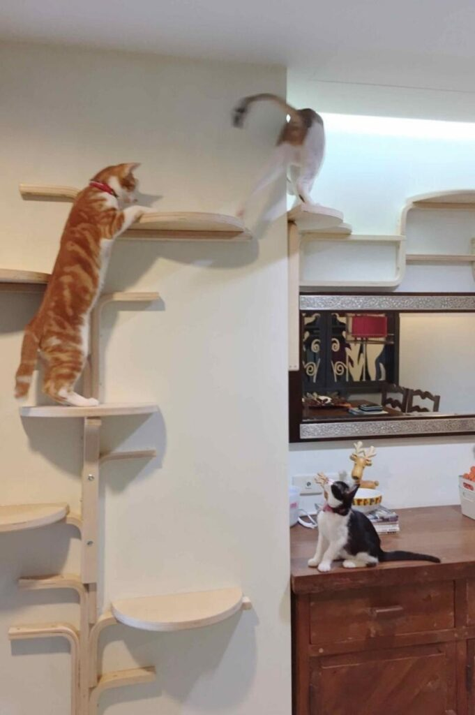 Great example of DIY cat trees
