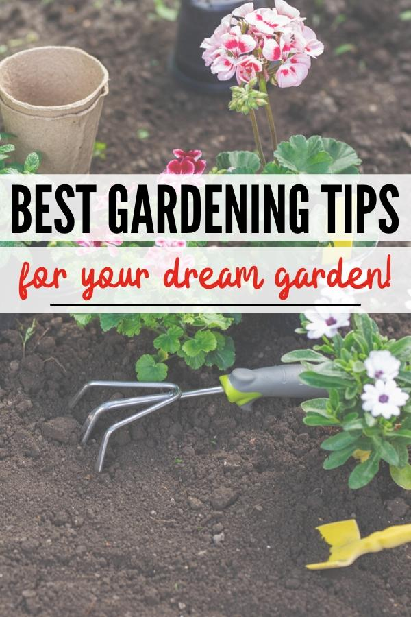 best gardening tips for beginners pin image
