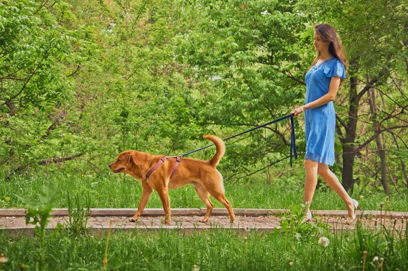 woman walking her dog on a leash outside