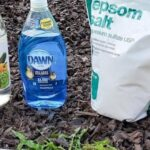 Dawn Dish soap uses featured image